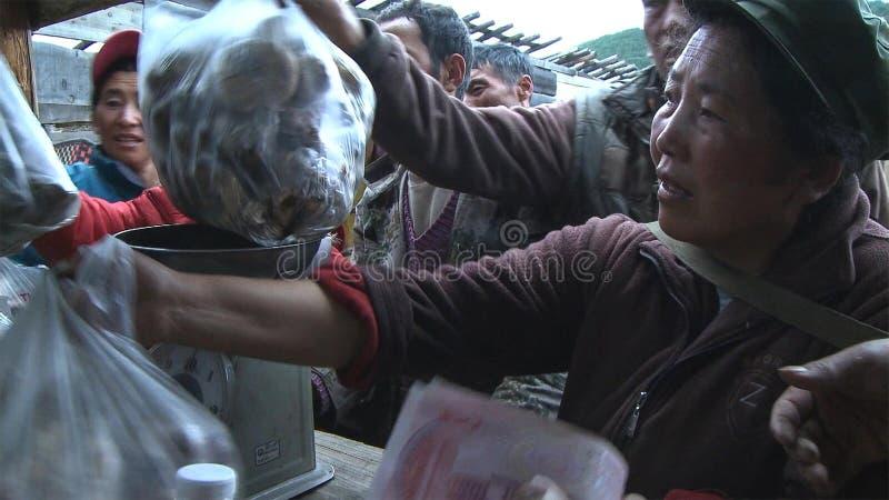 Los tibetanos están buscando un matsutake vendedor en el pueblo de Jidi, se sientan en el centro del área de la producción del ma foto de archivo libre de regalías