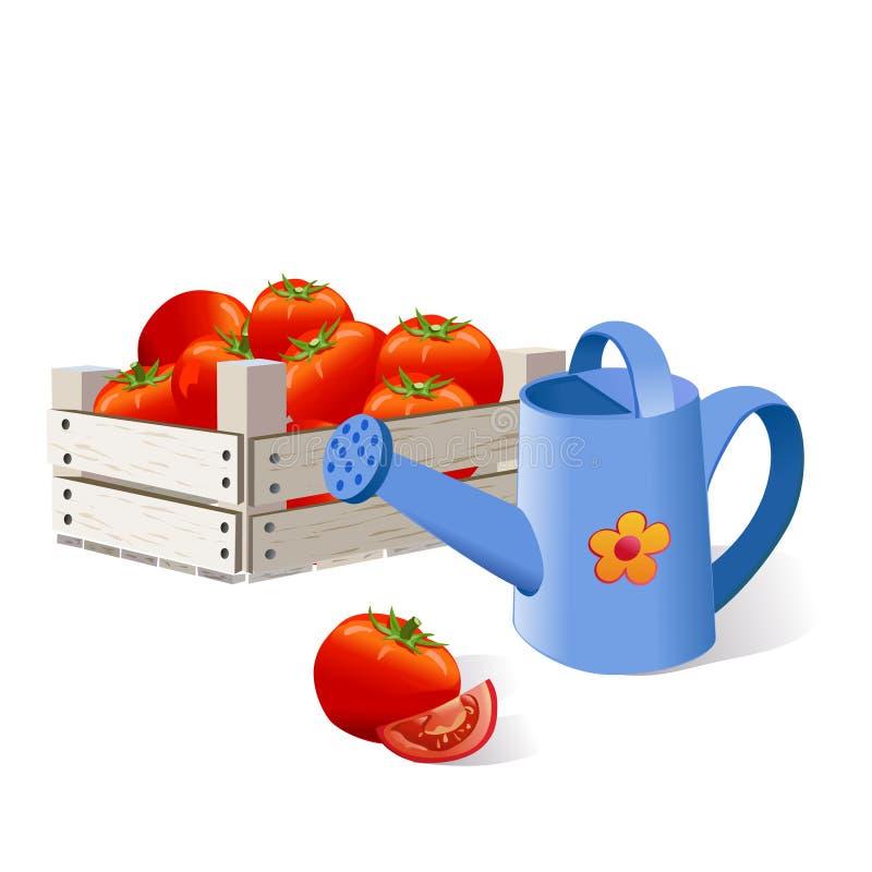 Los tomates en una caja, regando, cosechan ilustración del vector