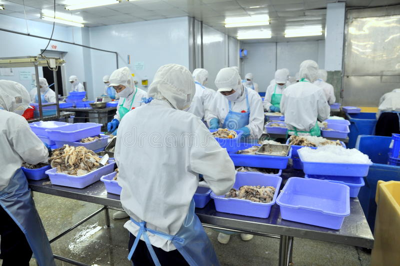 Los trabajadores están trabajando difícilmente en una fábrica de los mariscos en la ciudad de Ho Chi Minh, Vietnam fotografía de archivo libre de regalías