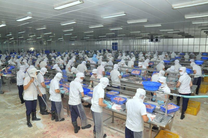 Los trabajadores vietnamitas están cortando pescados del pangasius en una planta de tratamiento de los mariscos en el delta del M foto de archivo