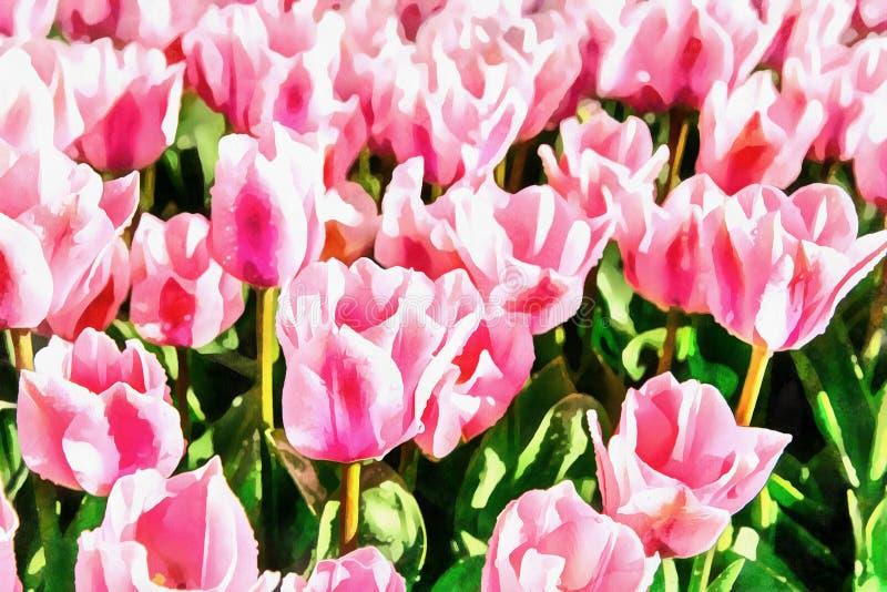 Los trabajos en el estilo de la pintura de la acuarela Planta rosado del tulipán stock de ilustración