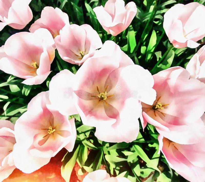 Los trabajos en el estilo de la pintura de la acuarela Tulipán rosado stock de ilustración