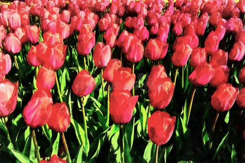 Los trabajos en el estilo de la pintura de la acuarela Tulipanes rojos stock de ilustración