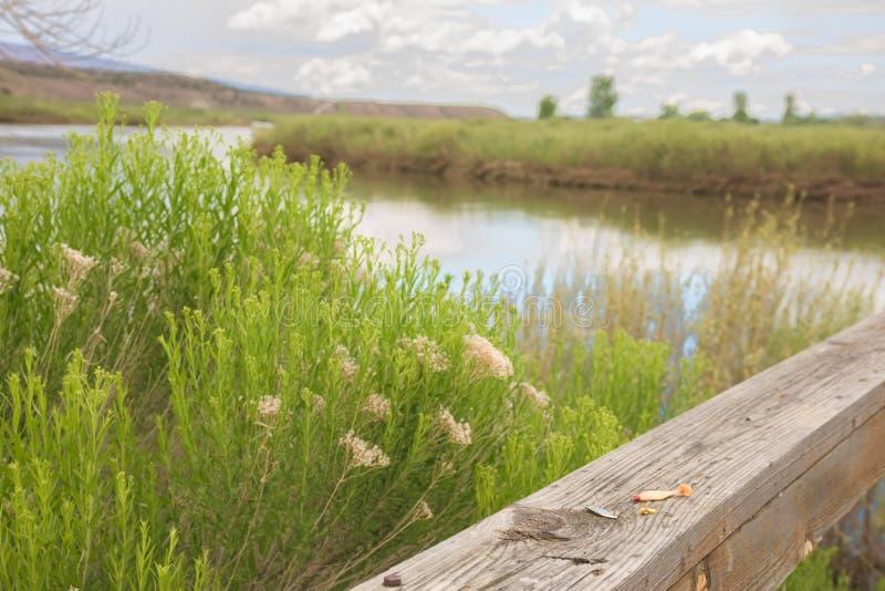 Los trastos dejados en la pesca del muelle a lo largo de la impulsión de la fauna en marrones parquean a principios de verano foto de archivo