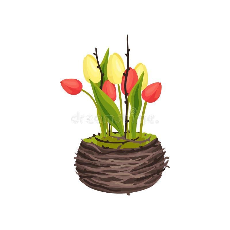 Los tulipanes amarillos y rosados crecen en la imagen del vector de la jerarquía en el fondo blanco stock de ilustración