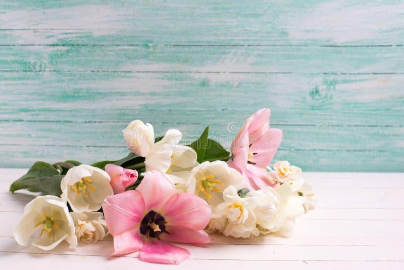 Los tulipanes y las flores frescos del narciso en blanco pintaron al CCB de madera imagenes de archivo