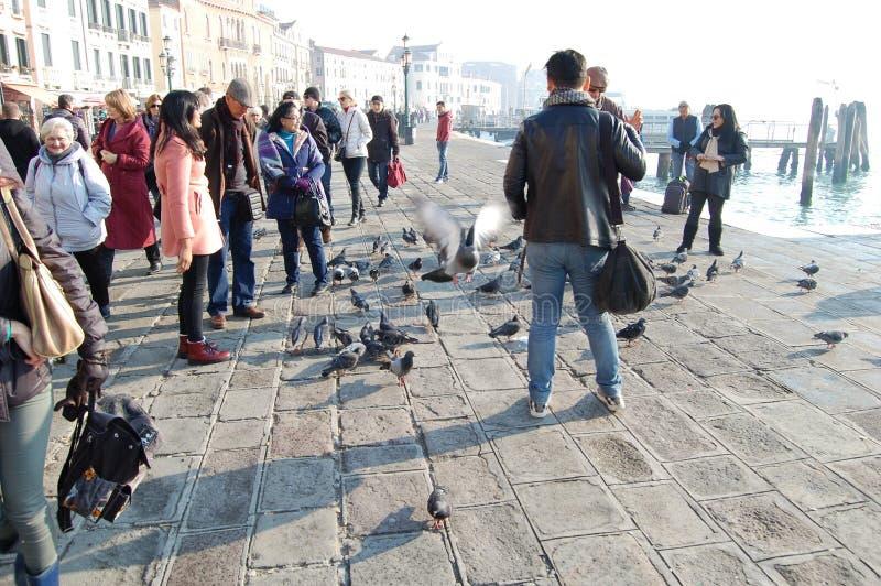 Los turistas alimentan las palomas en la plaza Venezia, Italia fotos de archivo libres de regalías