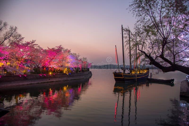 Los turistas miran las flores de cerezo de la noche fotos de archivo