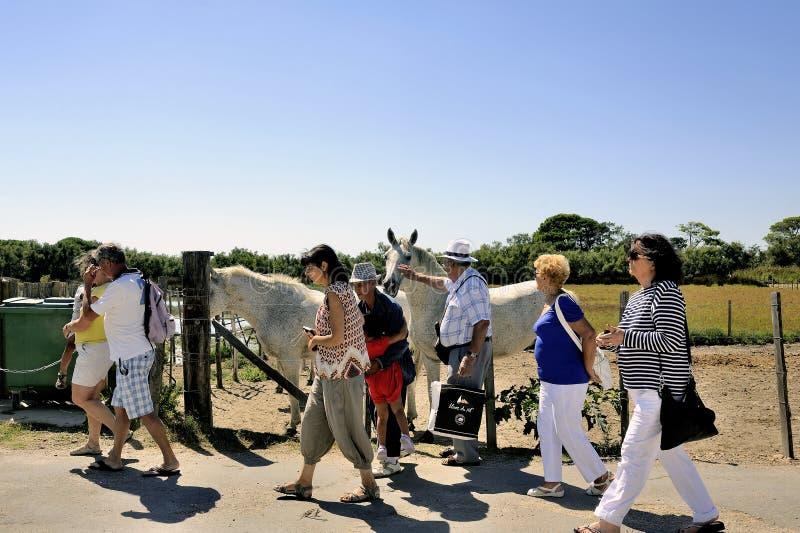 Los turistas se van después de su visita a los caballos de Camargue imágenes de archivo libres de regalías