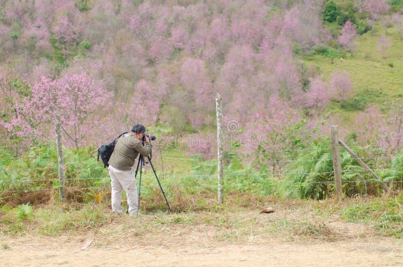 Los turistas toman a foto la cereza salvaje de Himalaya fotos de archivo libres de regalías
