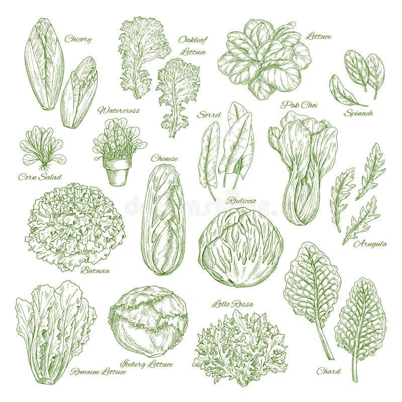 Los verdes de la hoja y de la verdura de la ensalada bosquejan diseño determinado ilustración del vector