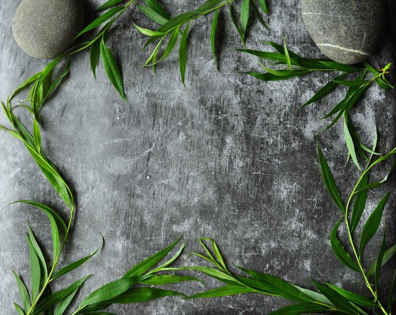 Los verdes enmarcan en un fondo gris Ramas del sauce y de hojas verdes Piso melancólico gris del cemento imagenes de archivo