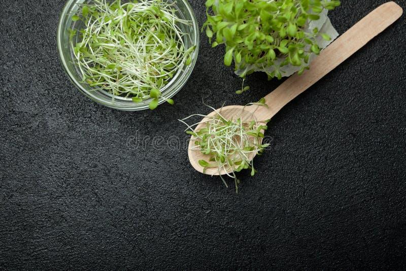 Los verdes micro frescos orgánicos son ricos en antioxidantes y vitaminas en un fondo negro, espacio vacío para el texto fotos de archivo libres de regalías