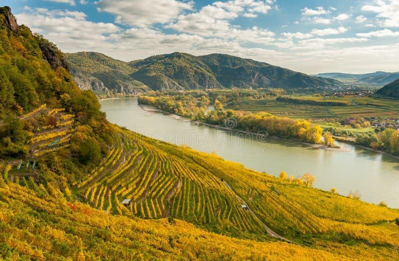 Los viñedos cerca de Weissenkirchen Wachau Austria en otoño colorearon l imagenes de archivo