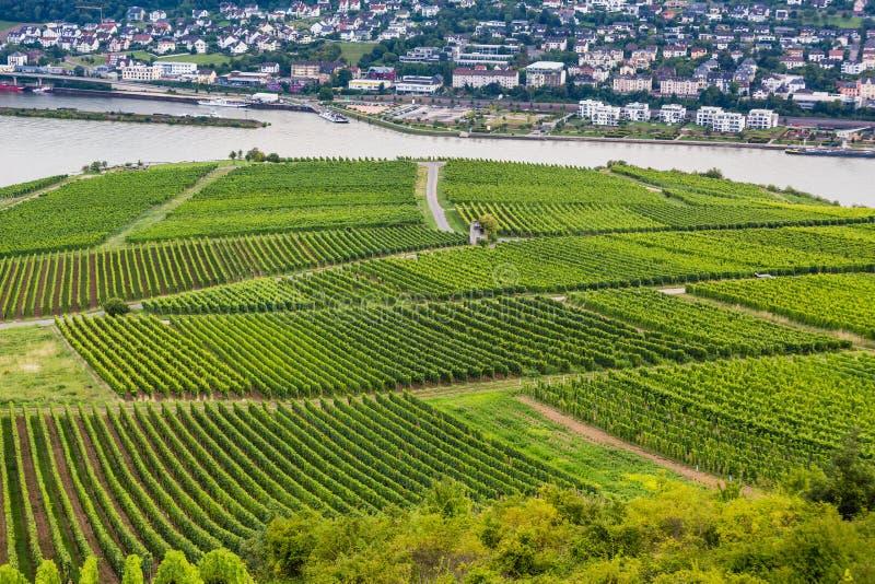 Los viñedos cubren las laderas en Rudesheim, Alemania fotos de archivo libres de regalías