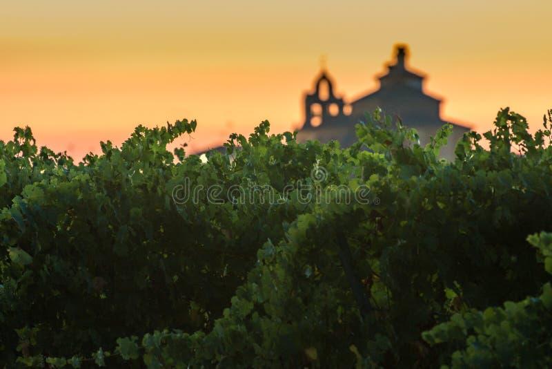 Los viñedos en el distrito de Nieva Segovia, España Vinos blancos de las uvas más de alta calidad, perteneciendo a la designación imagen de archivo
