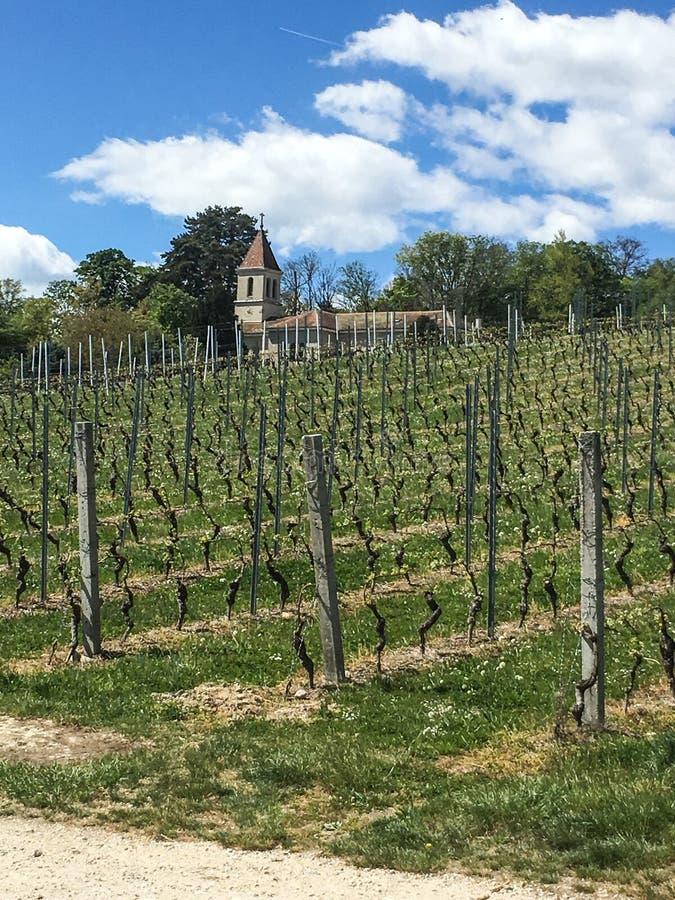 Los viñedos y un pequeño campo de Ginebra de la iglesia fotos de archivo