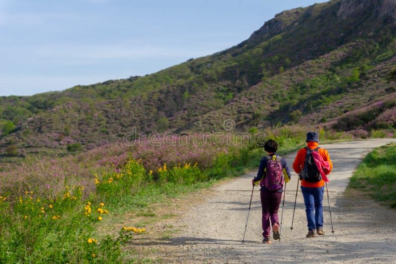Los viajeros coreanos caminan sobre la manera del paseo de la ladera en parque del país de Hwangmaesan, Gyeongsangnam-hacen foto de archivo