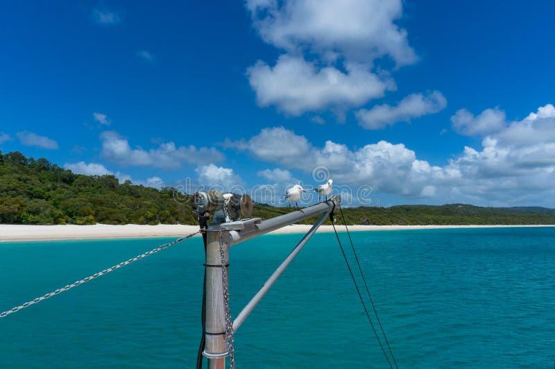 Los yates mast con las gaviotas y la playa tropical hermosa en backgr foto de archivo libre de regalías