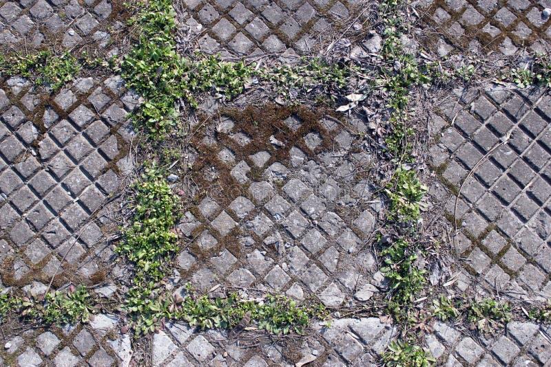 Losas de la calle del hormigón del cemento, hierba rombos Puede ser utilizado como fondo fotos de archivo libres de regalías