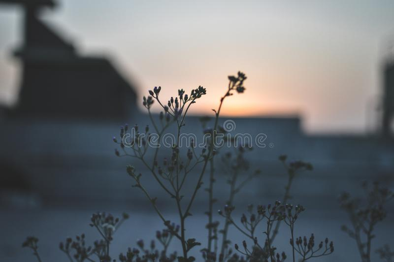 Lose Up Photo of Green Flower royalty free stock image
