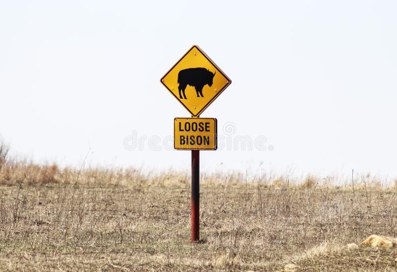 Loser Bison mit Bild von den Tiervorsichtzeichenständen umgeben durch Wintergras auf dem hohen Gras-Grasland in Oklahoma USA lizenzfreies stockfoto