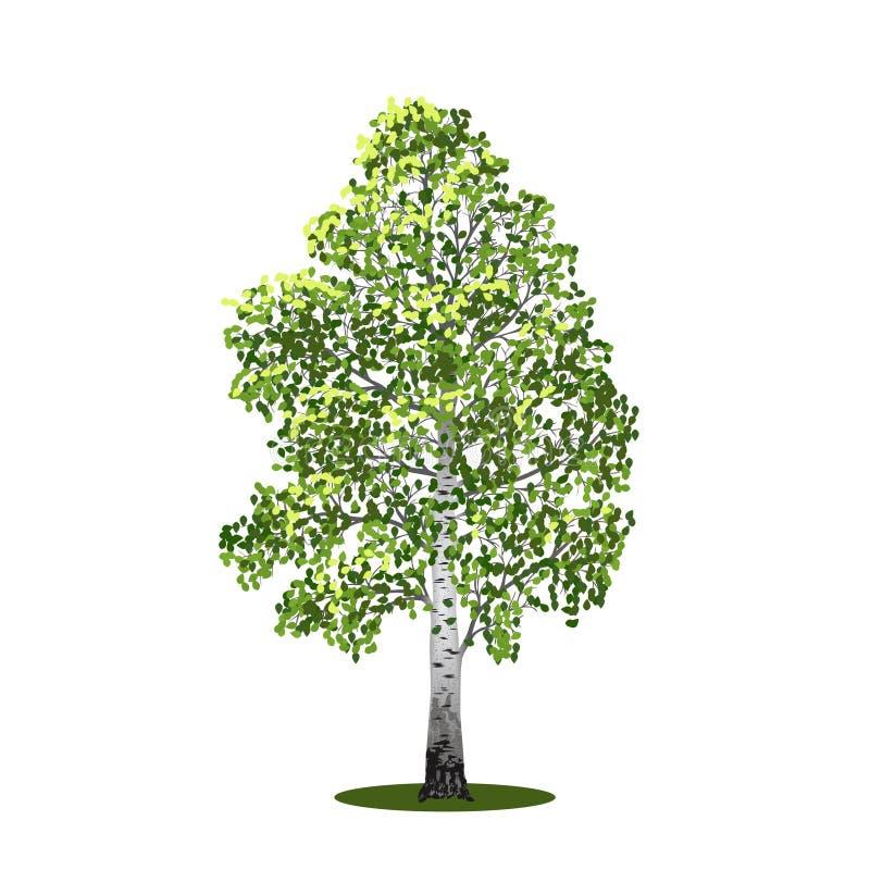 Losgemaakte boomberk met bladeren, vectorillustrati