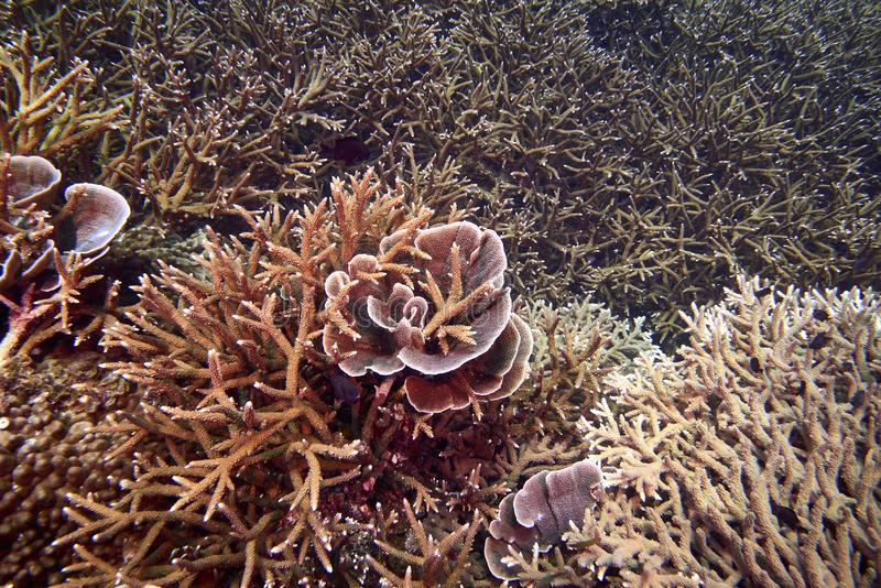 Losin south of Thailand 2018. Beautiful diving underwater with Fishes and Corals at Losin south of Thailand 2018 stock photography