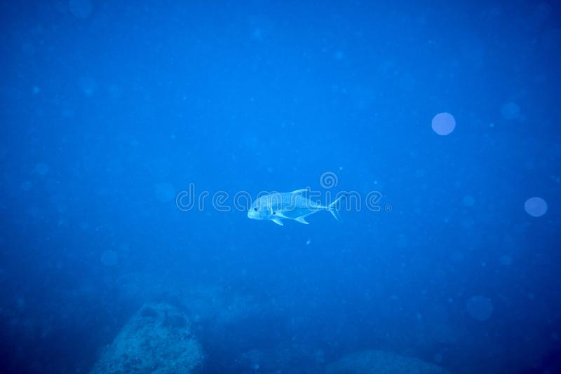 Losin south of Thailand 2018. Beautiful diving underwater with Fishes and Corals at Losin south of Thailand 2018 stock photos
