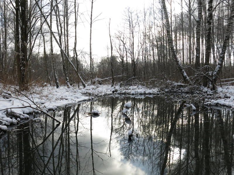 Losinyy Ostrov, Forest Lake royalty-vrije stock fotografie