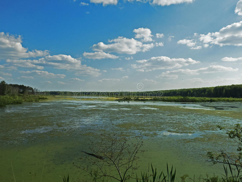 Losinyy Ostrov, Forest Lake royalty-vrije stock foto