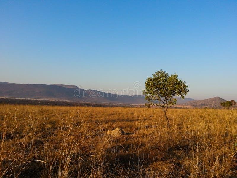 Loskop-Naturreservat lizenzfreie stockbilder