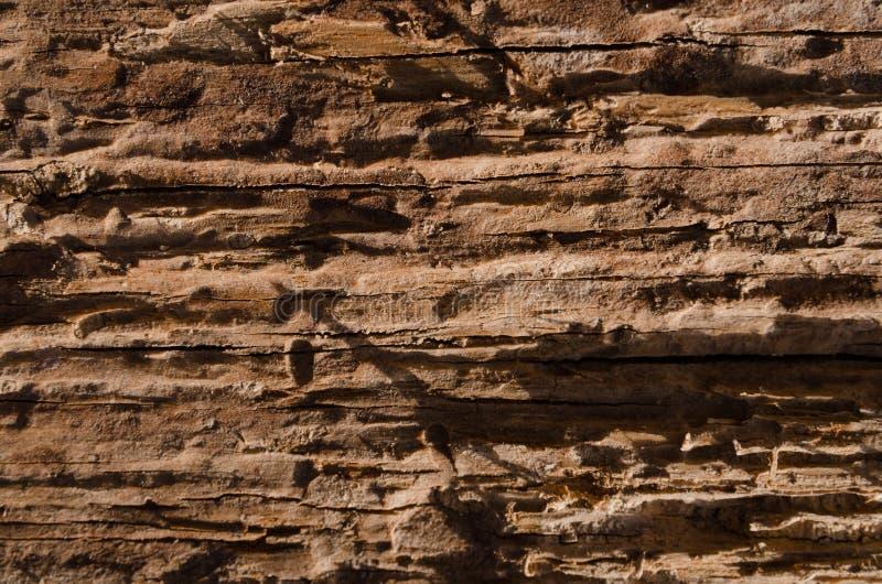 Lossa textur av ruttet trä arkivbilder