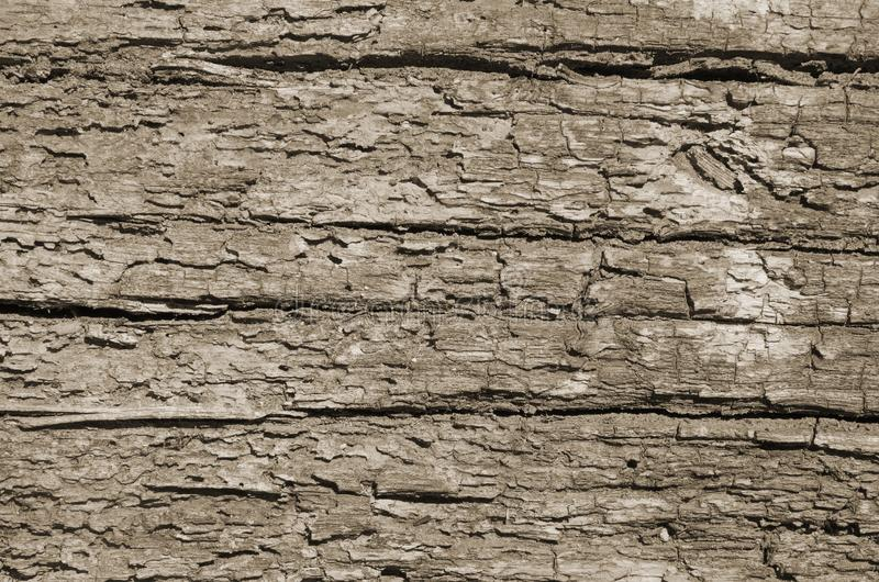 Lossa textur av ruttet trä arkivbild