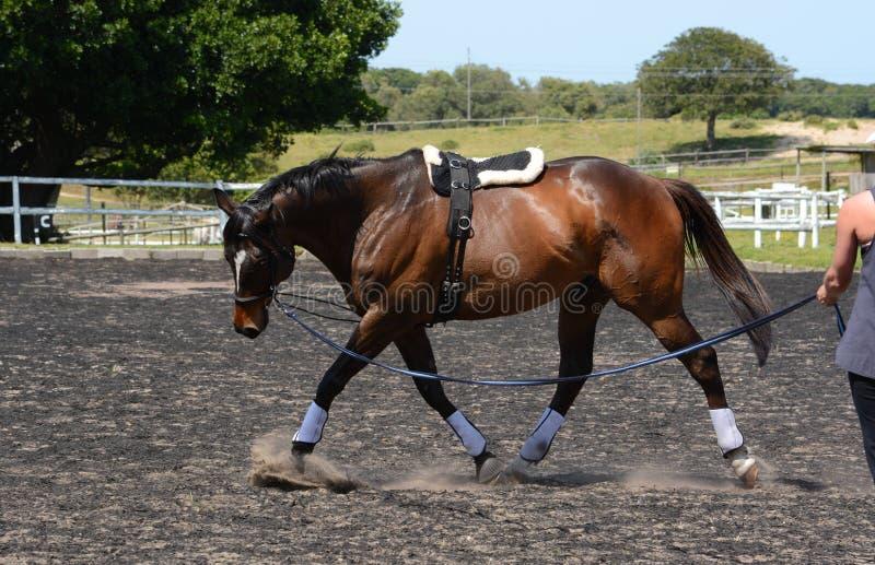 Losstürzen eines Pferds stockfotos