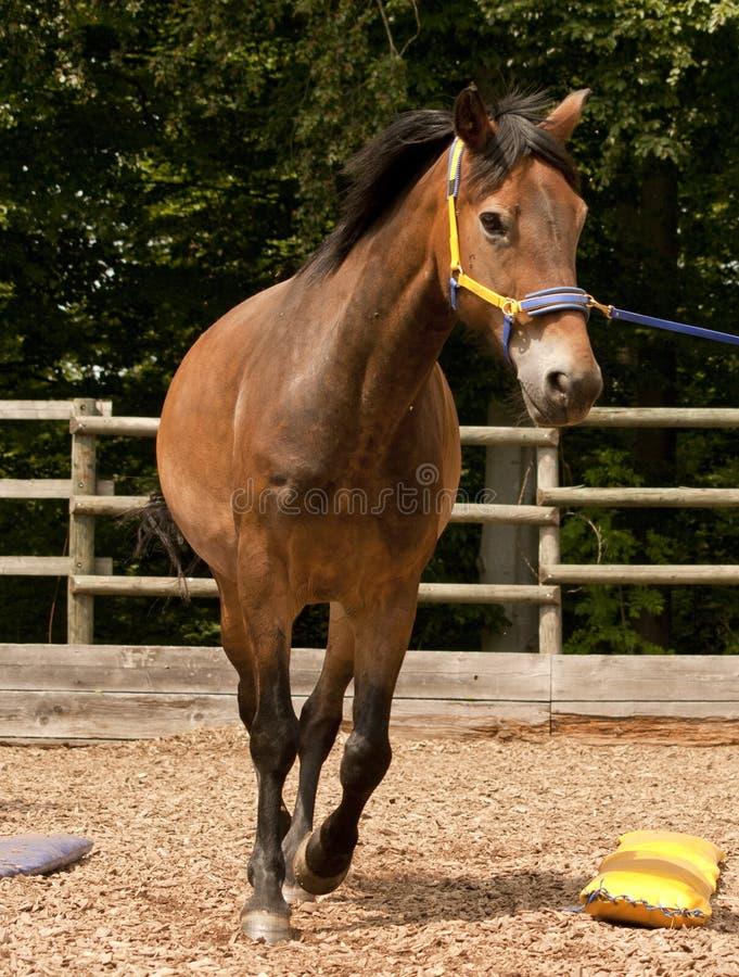Losstürzen eines Pferds stockbilder