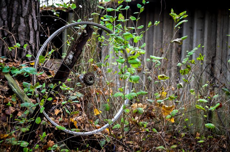 Lost bike wheel hanging in plants royalty free stock photo