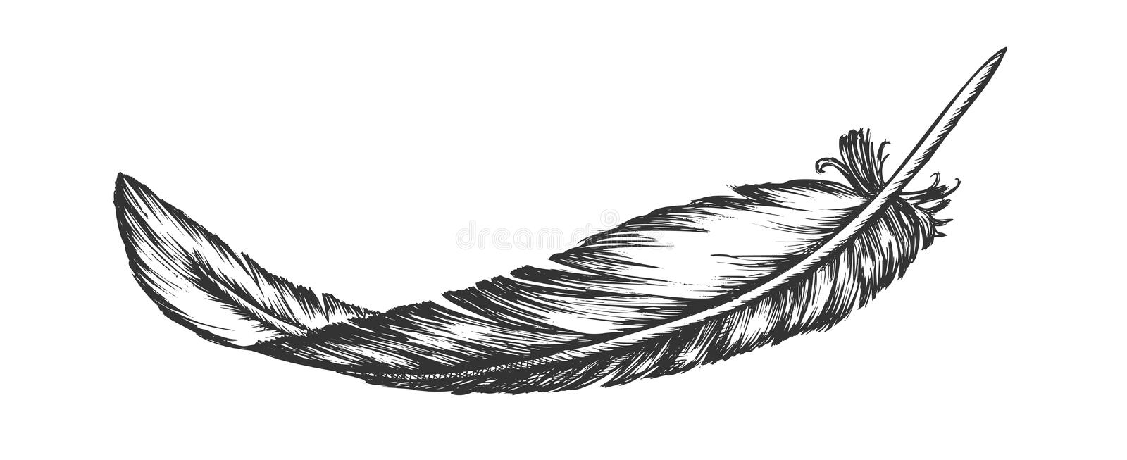 Lost Bird Outer Element Feather Hand Drawn Vector vector illustration