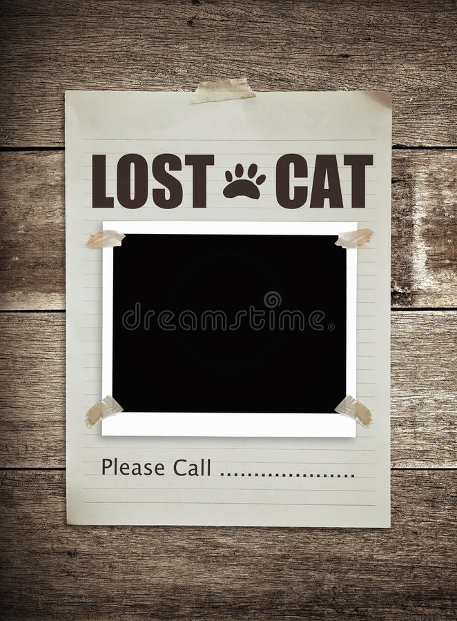 Lost cat. Paper on wooden background stock images