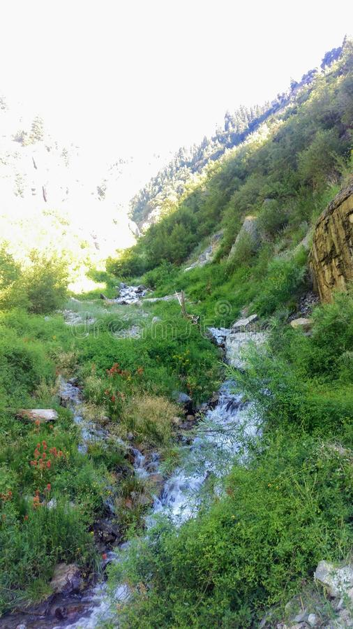 Lost Creek & Indian Paintbrush stock images