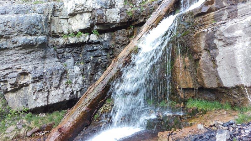 Lost Creek superior cae - tronco de árbol fotos de archivo libres de regalías