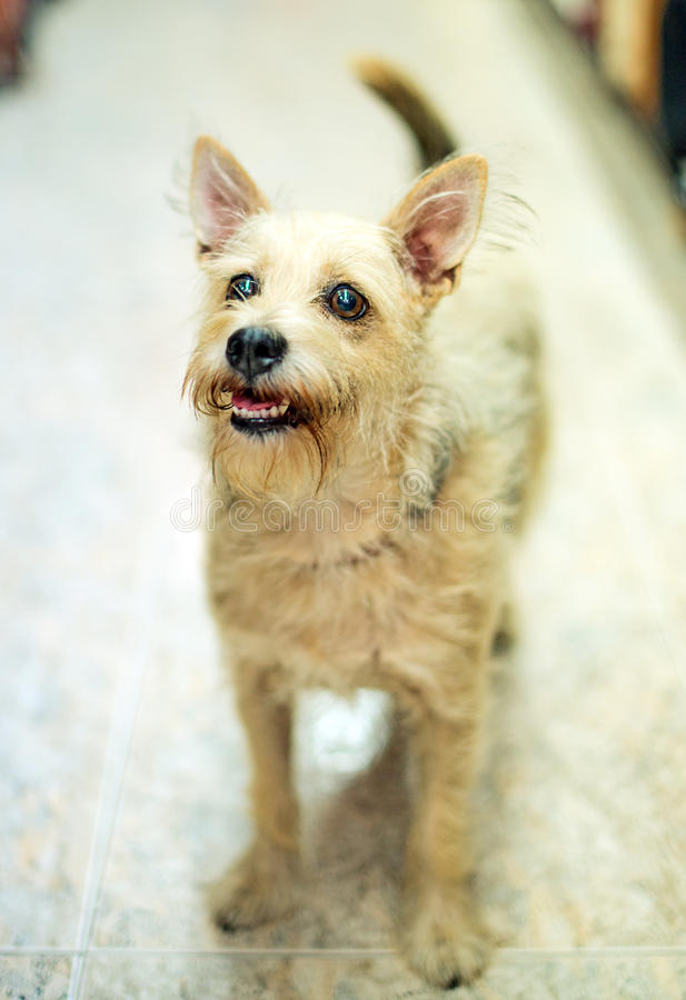 Free Lost Dog. Royalty Free Stock Photo - 51396615