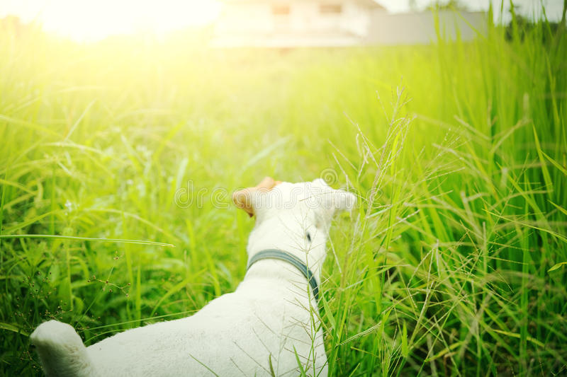 Lost dog find its house. Pet and animal royalty free stock photo