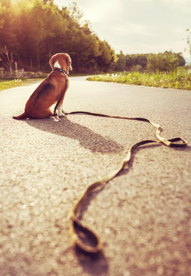 Free Lost Dog Sitting On The Road Alone Stock Photo - 55148770