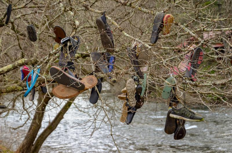 Lost and found tree. Lost shoes hang from a tree along a river royalty free stock photo