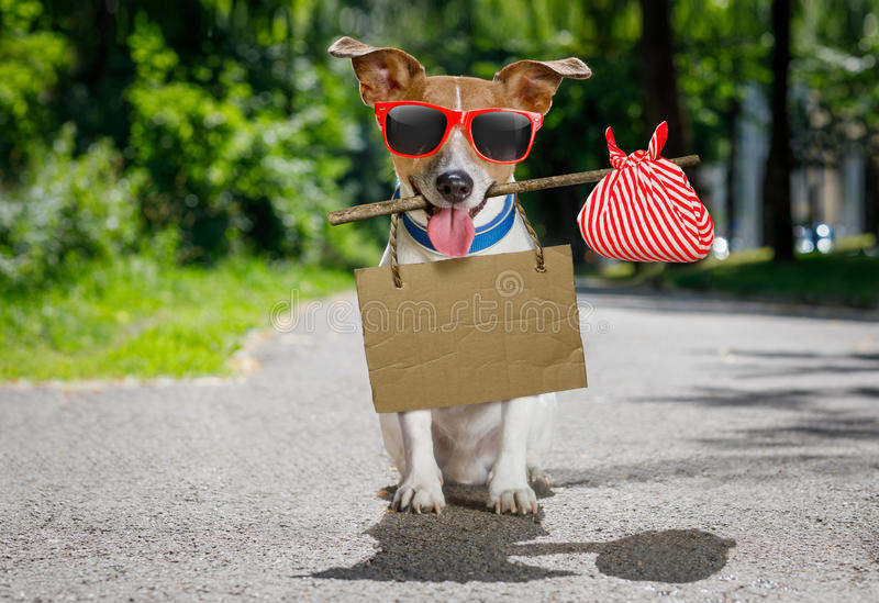 Lost and homeless abandoned dog royalty free stock image