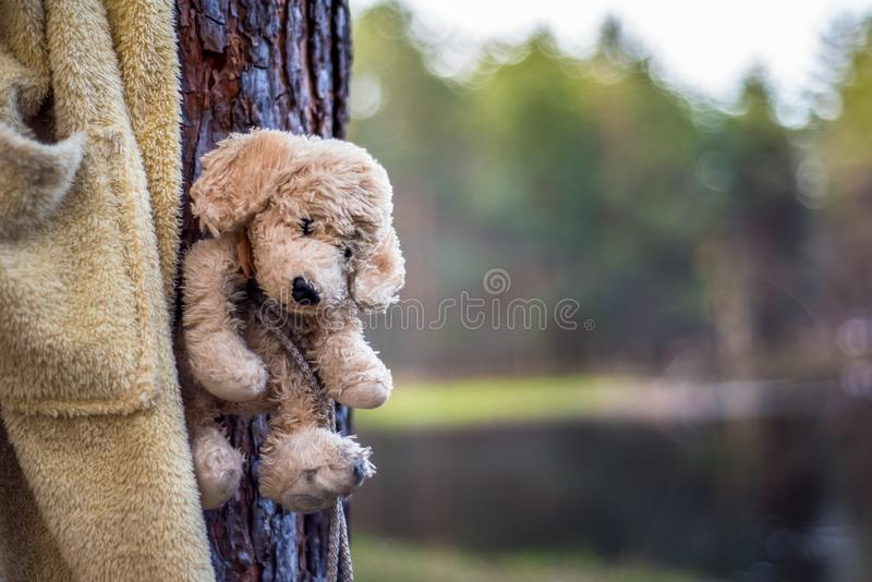 Lost teddy bear royalty free stock photos