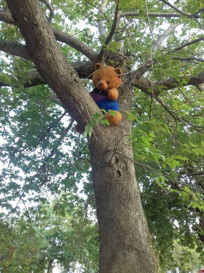 Lost teddy bear stock photo