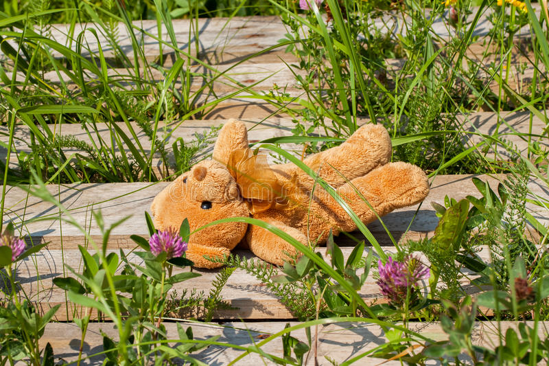 Lost toy bear lying on a wooden platform. Lost toy bear lonely and sad lies in the grass, on a wooden platform royalty free stock image