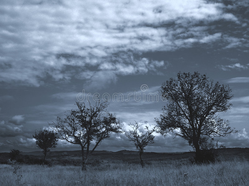 Lost Trees...1 Stock Photography